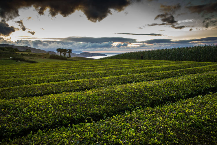 Agriculture Beauty In Nature Day Field Growth Landscape Mountain Nature No People Outdoors Rural Scene Scenics Sea Sky