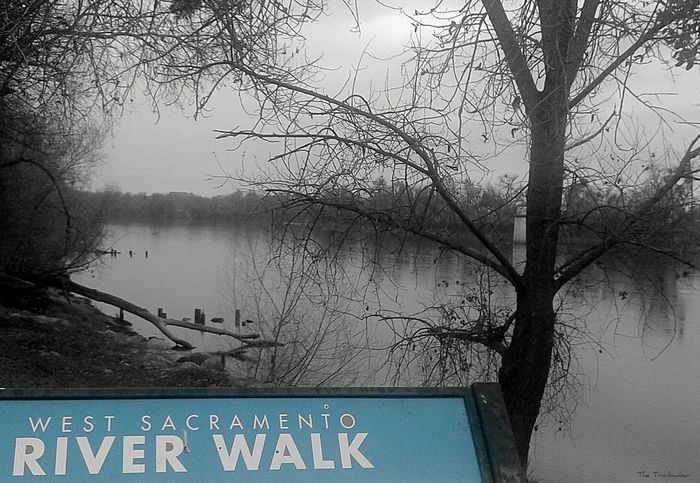 """River """"And when we were getting used to Spring weather, Winter suddenly came back to say hello!"""" ☁ Tree Nature Water not my First Eyeem Photo Branch Fog Black And White Outdoors Beauty In Nature Eyeemphotography Best Eyeem Pics From My Eyes To Yours EyeEm Gallery This Week On Eyeem EyeEm Best Shots Eye4photography  The Week On Eyem The Way I See It Photo Of The Day B&w Riverside View Welcome To Black That's My River in Sacramento, California ( USA )"""