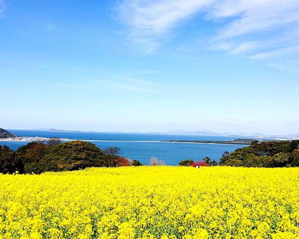 Fukuoka Nokonoshima Nanohana Spring First Eyeem Photo