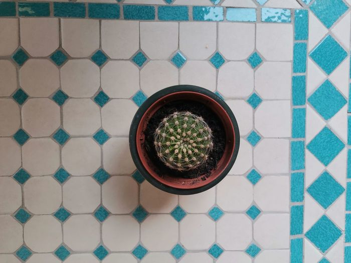 Directly above shot of cactus on tiled floor