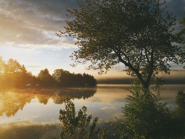 Morning Sunrise & Mist on Holland Pond Reflection Tree Nature Water Beauty In Nature Tranquil Scene Lake Scenics Sky Tranquility No People Outdoors Idyllic Growth Waterfront Sunset Silhouette Cloud - Sky Day