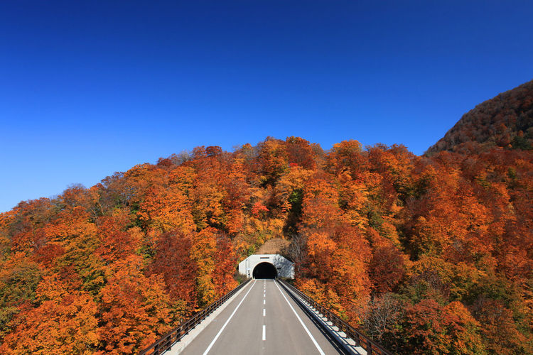 Road Amidst Trees Against Clear Blue Sky During Autumn