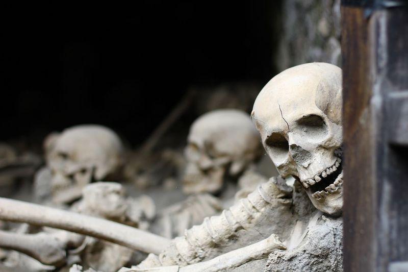Close-up of human skeletons