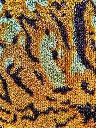 Full frame shot of multi colored animal
