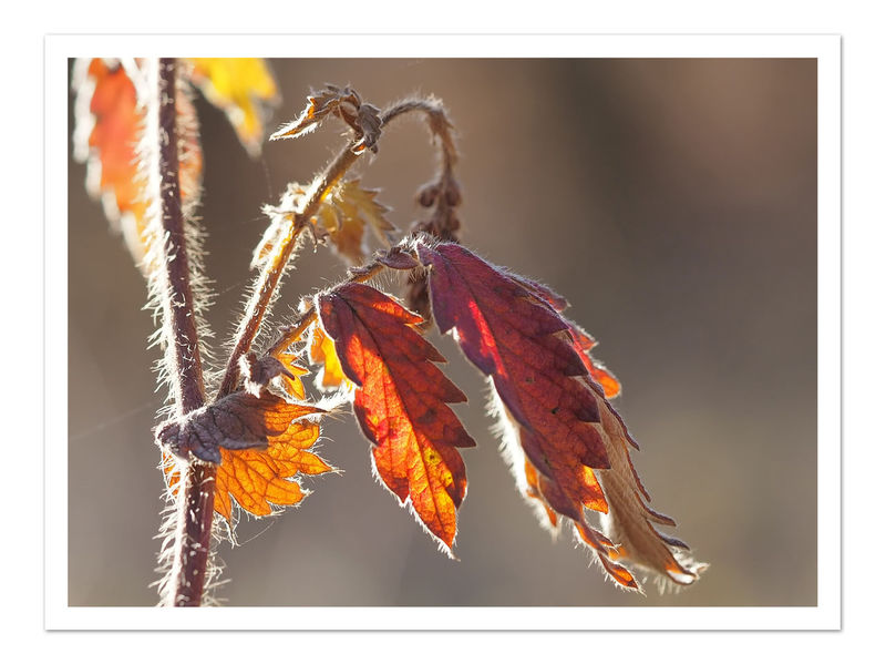 Look points in autumn / Blick-Punkte im Herbst Autumn Colors Blatt Daylight Details Of Nature Filigran Flowers Leaves🌿 Light Little Picture Macro Nature No People 😇😇😇 Plant Red Red Color Wood