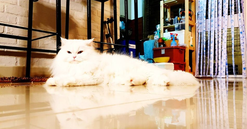 EyeEm Selects Pets Domestic Cat Water Animal Themes Architecture