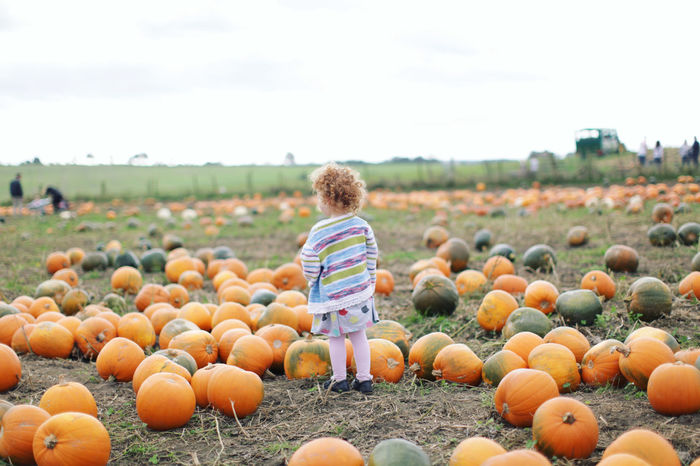 Little Pumpkin Children Halloween Halloween Horrors Pumpkins Adorable Casual Clothing Child Childhood Curly Hair Day Field Full Length Ginger Girl Growth Halloween Nature One Person Outdoors People Pumpkin Pumpkin Patch Real People Rear View Sky