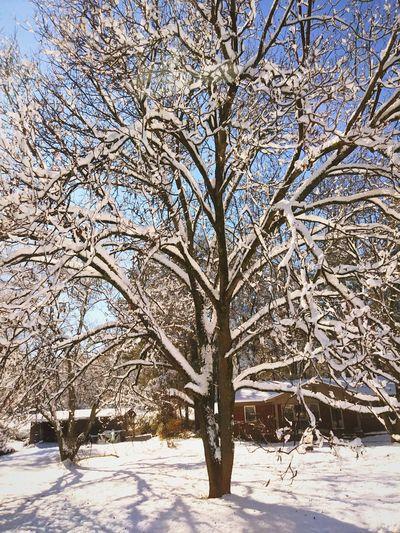 winter 2017 Snow ❄ Winter Wonderland Wintertime Tree Snowday ⛄❄ Dec 2017 Beauty In Nature No People Bare Tree Day Sky