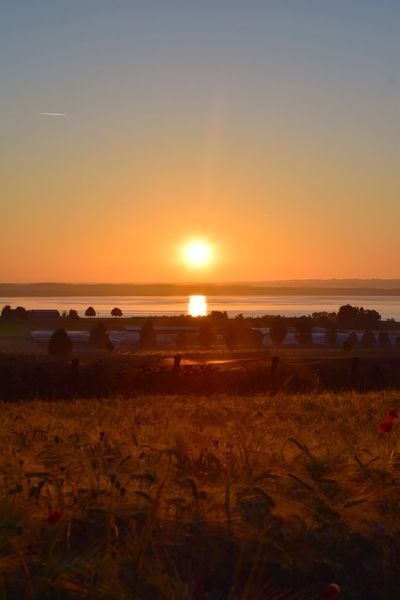 Sunset Nature Sun Beauty In Nature Sea Tranquil Scene Scenics Tranquility Beach Sky Water Silhouette Horizon Over Water No People Outdoors Landscape Clear Sky Sand Plant Day Bodensee Bodenseebilder Sonnenaufgang