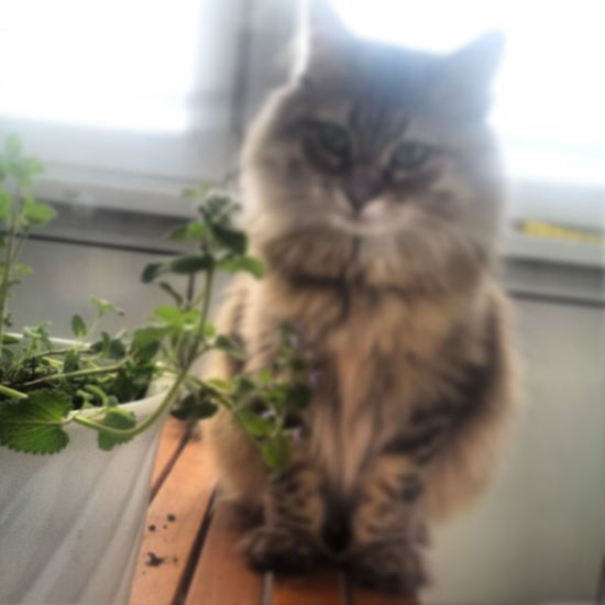 my baby Loveit City Bergedorf Hamburg Katze Urlaub Hollidays Persian Cat  Cat Plant Life Plant Growing Blooming Whisker Window Sill Sleepy At Home Stray Animal Yellow Eyes Tabby Flower Head