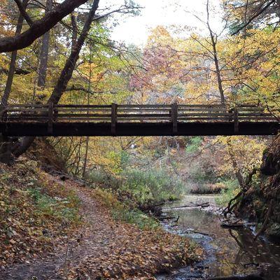Lovely Fall day in Illinois. Bridges Landscape