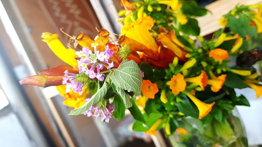 Flower Fragility Nature Freshness Plant Beauty In Nature Flower Head Window Close-up Day No People Petal Leaf Vase Outdoors Growth