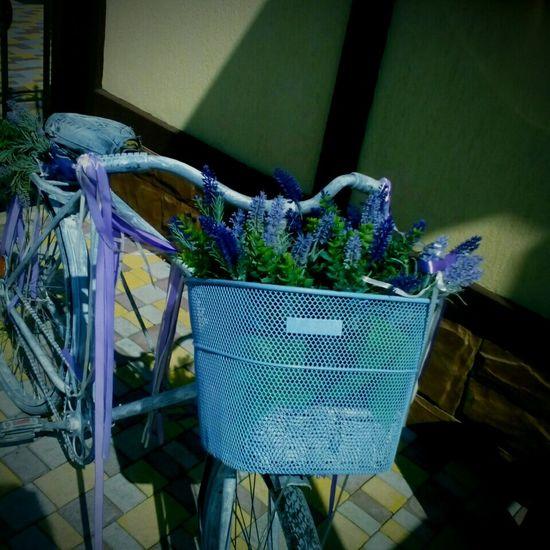 Glower Bike Cute Purple
