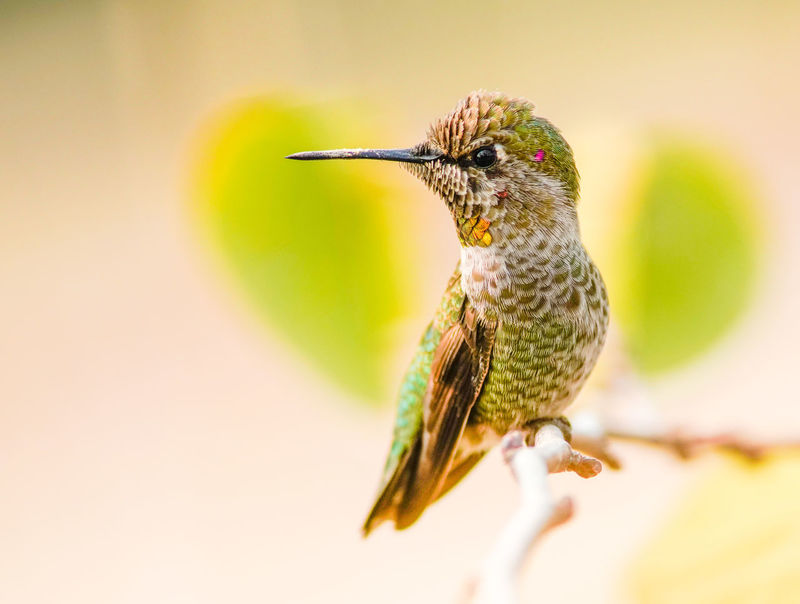 Bird Perching Insect Living Organism Colored Background Close-up Animal Themes