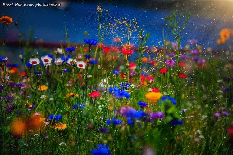 colorful spring Andernach Nature_collection Nature Germany Landscape Spring Flowers Canon Springtime Spring Spring Flowers EyeEm Selects Flower Flower Head Galaxy Water Multi Colored Flowerbed Poppy Blue Purple Sky Wildflower Uncultivated Cosmos Flower Botany Plant Life Botanical Garden Pollen Focus Blossom