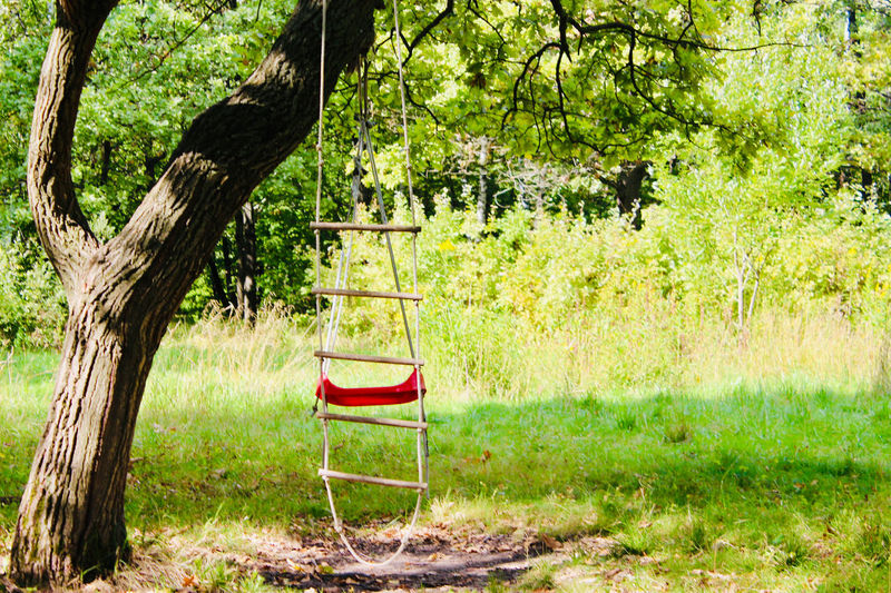 Tree Plant Seat