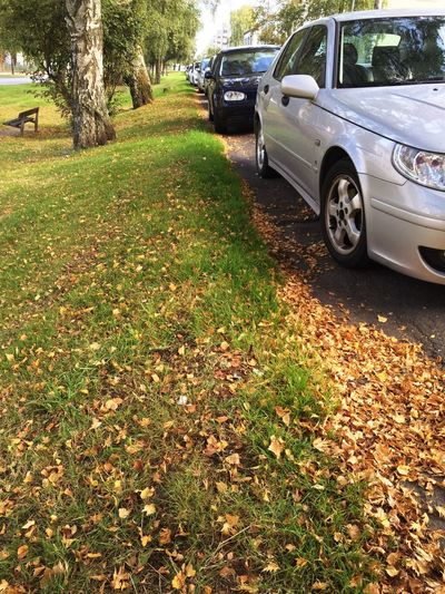 Car Transportation Mode Of Transport Land Vehicle Street Leaf Road Tree Autumn Tree Trunk Day Outdoors Hedge Stationary City Life No People Serenity Tranquility Original