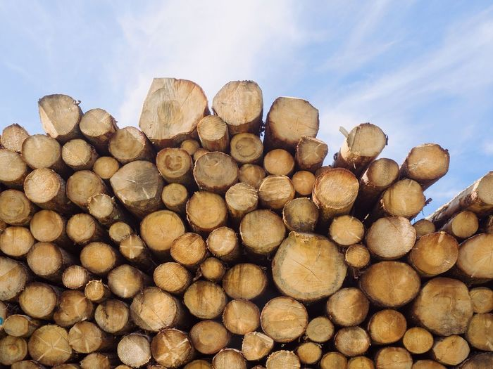 Large Group Of Objects Abundance Stack Nature Sky No People Wood Heap Tree Day Wood - Material Outdoors Forest Brown Lumber Industry Deforestation Timber Log Backgrounds Healthy Eating