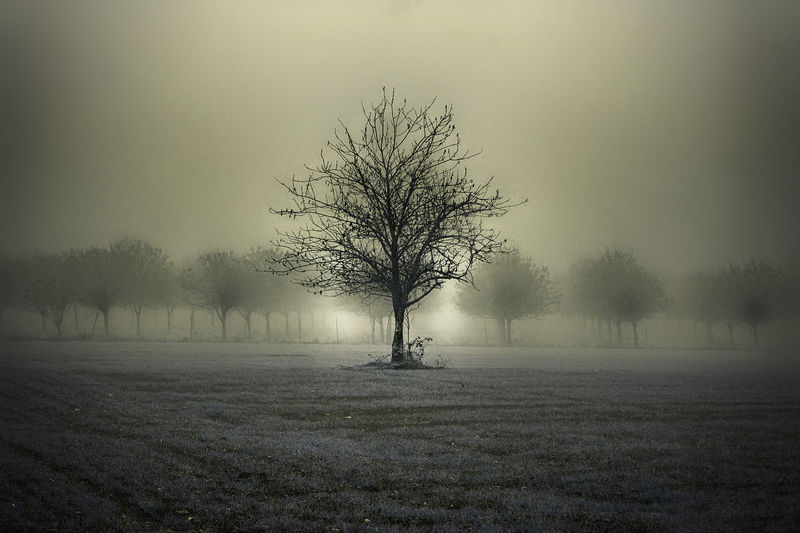 One and old Fog Countryside Landscape Nature Nature_collection Nature Photography Field Shadow Morning Winter Taking Photos Taking Pictures Tree Sunset Backgrounds Sky Close-up The Great Outdoors - 2019 EyeEm Awards
