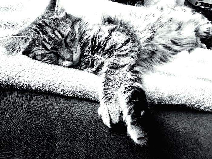 sleepy Cat♡ Bff❤ Sleepy MyLove ♡ Blackandwhite Home Sweet Home Cute Pets Kitty Cat Sweat Sleep Fluffy Scute Animal Photography Showcase: February