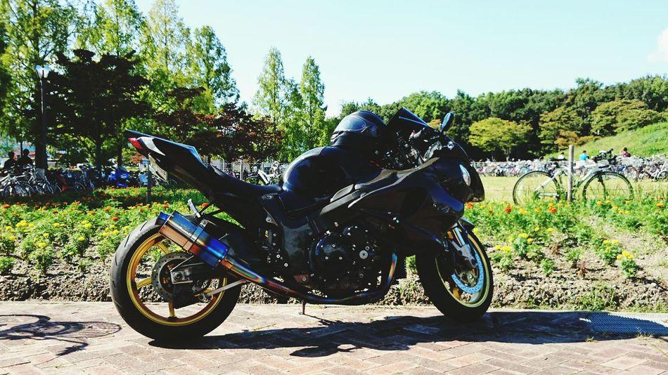 バイク Green Motorbike Vacation Nature