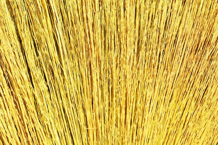Backgrounds Textured  Pattern Nature Close-up Broom Grass