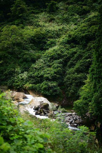 山歩き。Trekking. Trekking Plant Green Color Growth Tree Beauty In Nature No People Nature Day Tranquility Land High Angle View Water Foliage Lush Foliage Scenics - Nature Outdoors Forest Tranquil Scene Idyllic Flowing Water