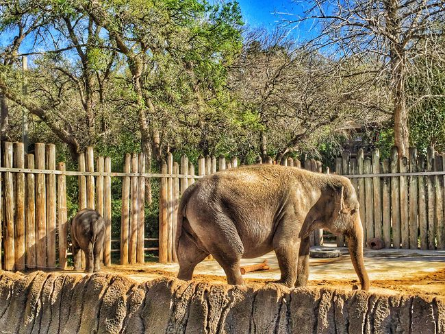 Asian elephants. March Days Spring Beautiful Day Sunlight Nature Photography Beautiful Share Your Adventure Get Inspired Zoo Animals  Zoo Day Elephants