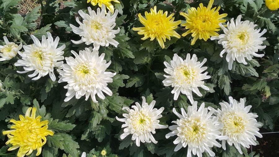 Flower Thaiand
