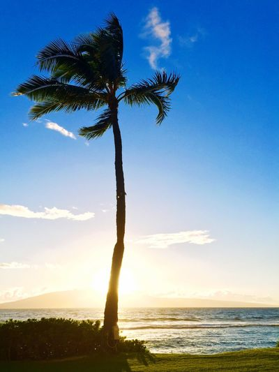 Low angle view of palm tree in front of sea against sky on sunny day