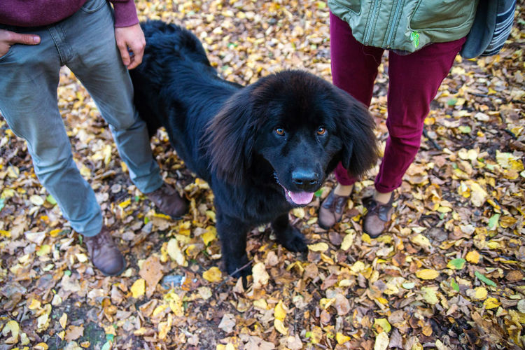 man woman and Newfoundland dog legs only, family Canine Dog One Animal Pets Domestic Mammal Domestic Animals Low Section Day Autumn Vertebrate Real People Standing Plant Part Leaf Human Leg Leisure Activity People Pet Owner Outdoors Body Part Change Jeans