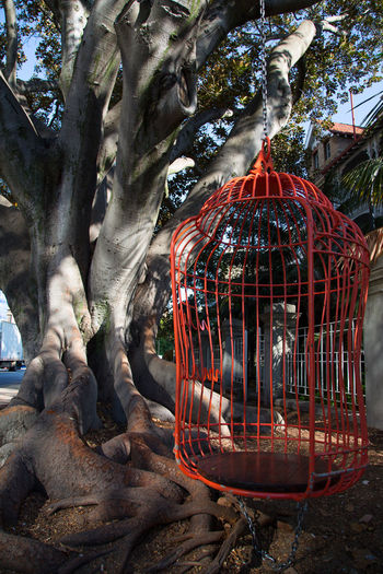 majestic tree in Perth city street, love it! Architecture Armchair Art And Craft Belief Cage Craft Creativity Day Human Representation Majestic Majestic Tree Nature No People Outdoors Plant Red Color Representation Rock Rock - Object Sculpture Solid Spirituality Tree