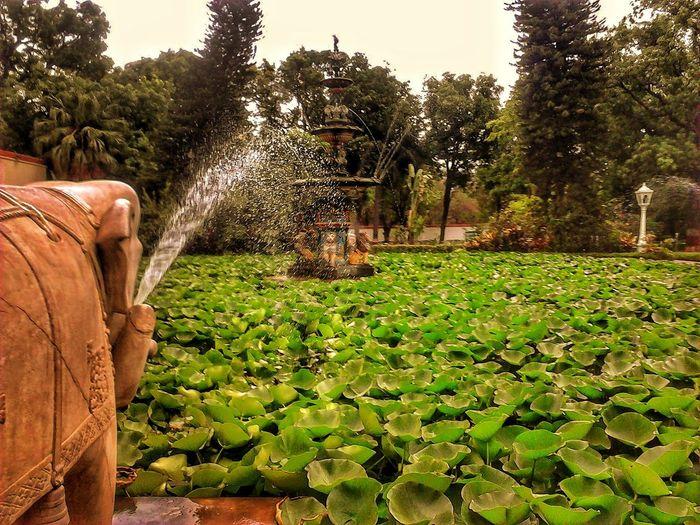 heaven EyeEm Selects Tree Water Irrigation Equipment Spraying Agriculture Sky Sprinkler Community Garden Watering Gardening Equipment Self-sufficiency Gardening Glove Wheelbarrow Horticulture Homegrown Produce