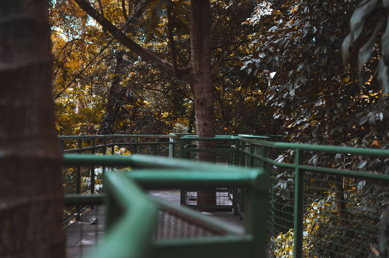 A Line in The Woods Tree Plant Nature Architecture Built Structure No People Focus On Background Railing Forest Autumn Day Outdoors Metal Selective Focus Land Growth Bridge Connection Change Plant Part
