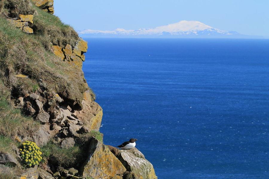 Bird Photography Iceland Beauty In Nature Cliff Latrabjarg Mountain Nature Outdoors Sea Snæfellsjökull Water