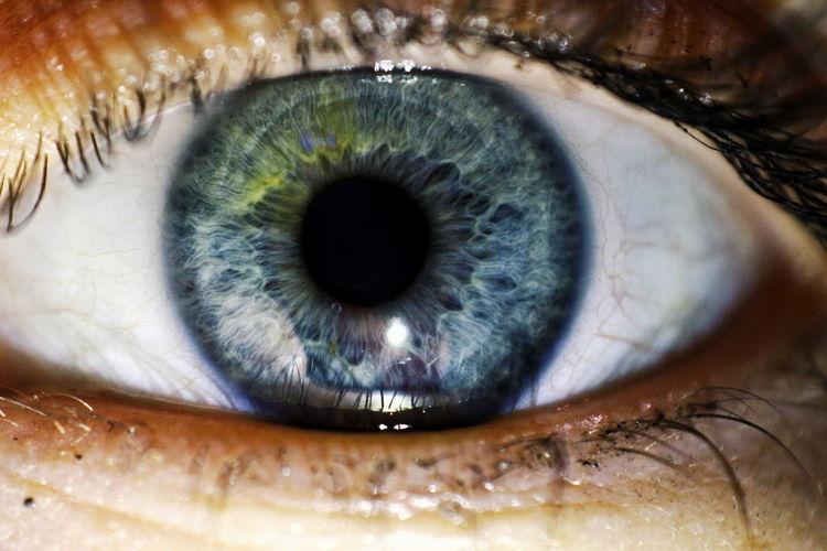 макро макросьёмка макросъемка Eyes глаза  Eyeball Eyelash Eyesight Iris - Eye Human Eye Sensory Perception Looking At Camera Close-up Macro Focus
