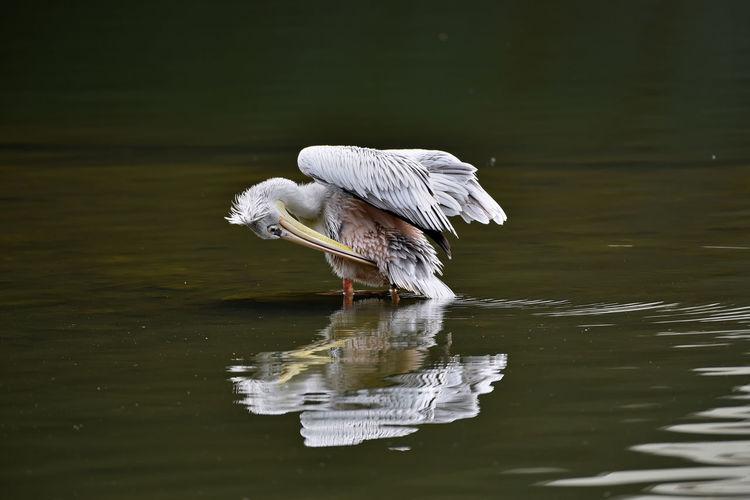White bird on a lake
