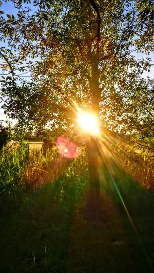 Totally Sunlight... Sunbeam Nature Beauty In Nature Tranquility Tranquil Scene Landscape Tree Sunset GetbetterwithAlex Original Picture Wendland Forest Green Color