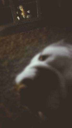 Porcelain Bear Puppy❤ Eye Home EyEmNewHere safe together.