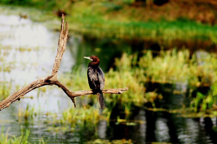 Bird Animals In The Wild Animal Wildlife One Animal Water Full Length Lake Nature No People Beauty In Nature Outdoors Animal Themes Perching Bird Of Prey Day