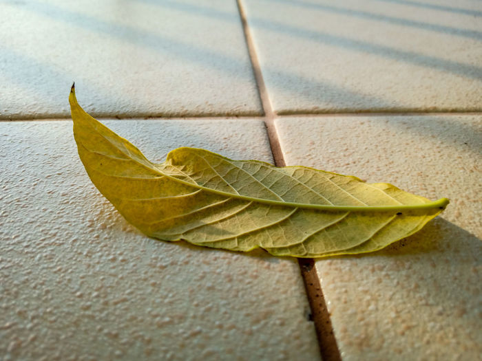 yellow leaf on tile ground Leaf Maple Autumn Change Maple Leaf Dry Close-up