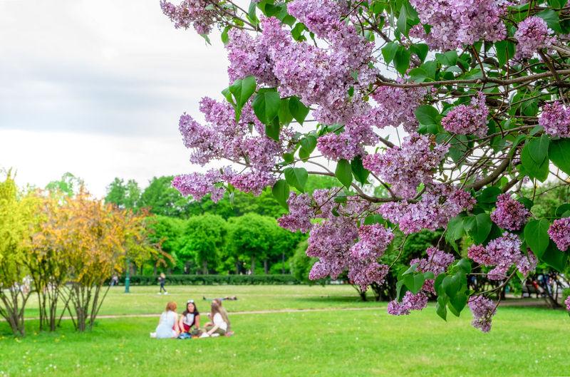 Group of people on purple flowering plants in park