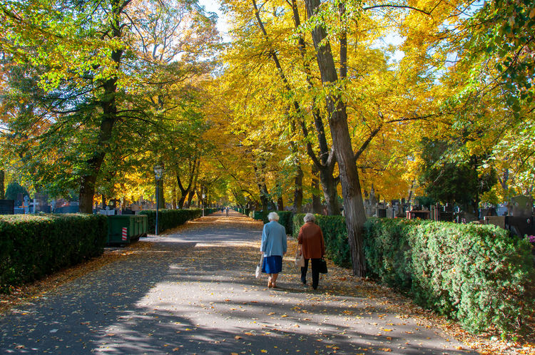 old way Adult Autumn Change Couple - Relationship Footpath Full Length Growth Leaf Lifestyles Men Nature Outdoors Park Plant Positive Emotion Real People Rear View The Way Forward Togetherness Tree Two People Walking Women