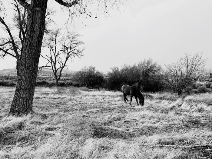 Black & White By Tisa Clark Animal Themes Mammal Bare Tree Field Domestic Animals Tree Nature Day Outdoors No People One Animal Grass Pets Beauty In Nature Sky