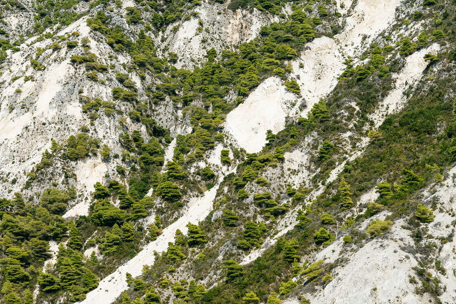 Rock Rock Formation Rocks White Rocks Mountain Tree Nature No People Non-urban Scene Backgrounds Full Frame Textured  Pattern Close-up Green Color Scenics