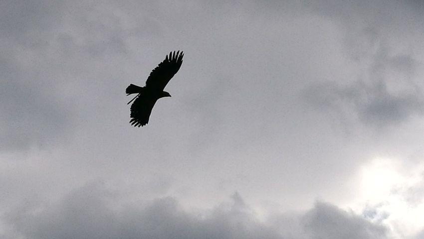 Nature Mountains Alpes Eagle Bird Cloud Cloudy
