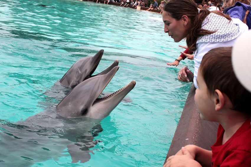 Want to kiss me? Performance Show Dolphins Playing San Diego Kiss Me Baby ❤ Sea World San Diego EyeEm United States Of America People And Animals Water Men Nature Animal Wildlife Animals In The Wild Child Childhood Two People People Outdoors