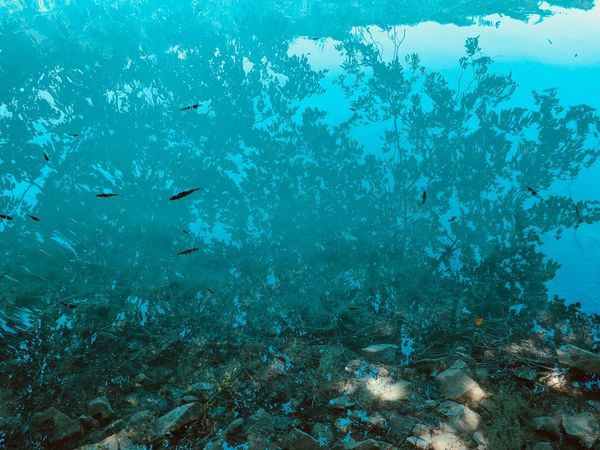 Wild Croatia Fishes Lake Water Deep