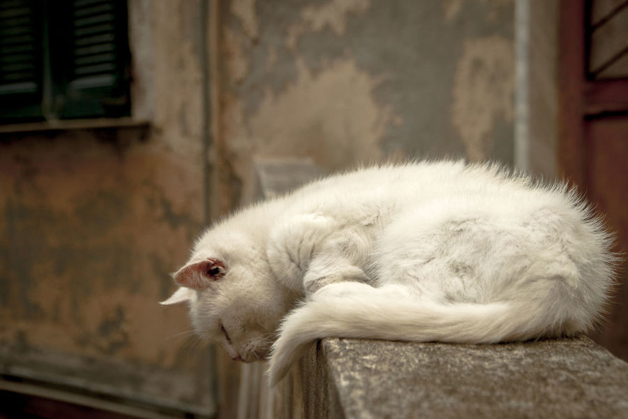 Animal Animal Themes Cat Cat On The Fence Close-up Domestic Animals One Animal Pets Sleeping Cat