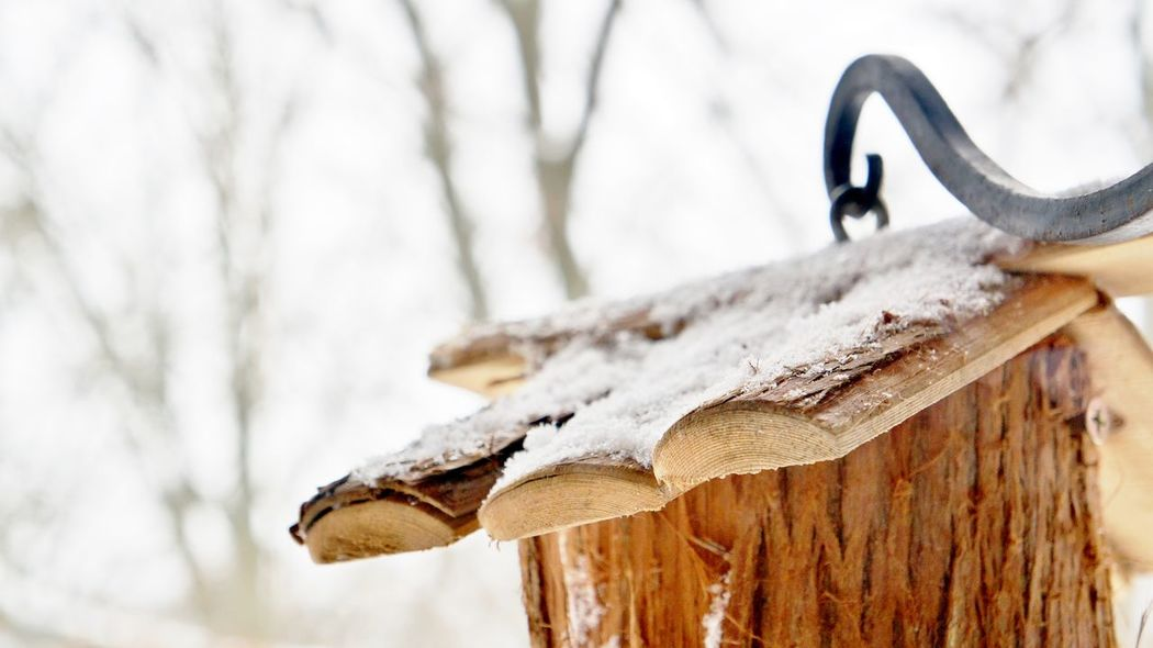 Close-up of the snow covered rooftop of a wooden birdhouse, hanging on a curly cast iron hook, winter 2015, by Nalinne Jones. Bird House Brown Cast Iron Close Up Close-up Curl Day Detail Full Frame Hanging Hung No People Outdoors Roof Selective Focus Snow Textured  Wood Wood - Material Wooden